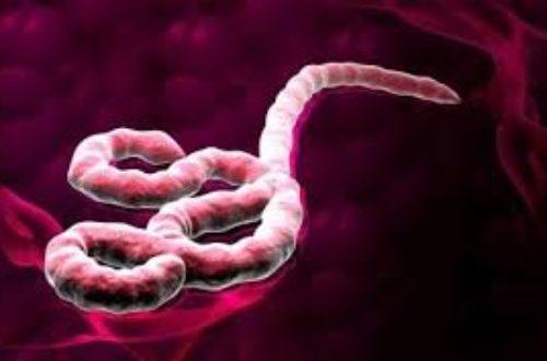 Article : Haïti/Santé : Et si Ebola frapperait à nos portes?
